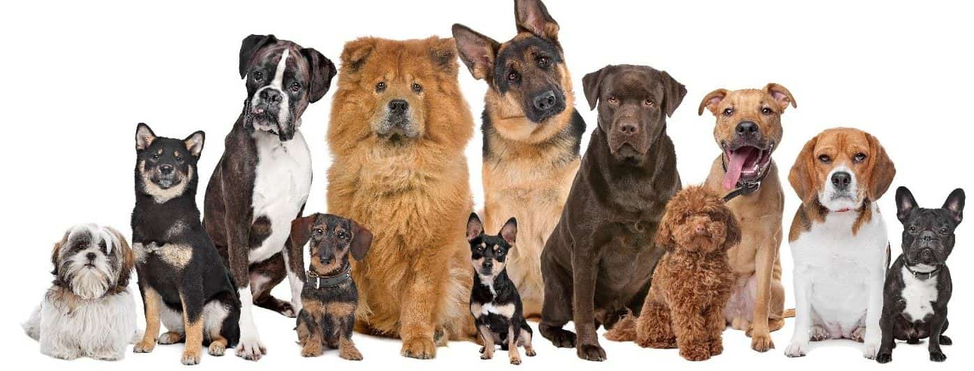 Most expensive breeds in line
