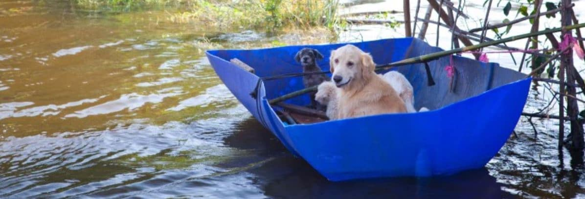 Dogs on the emergency boat to evacuate
