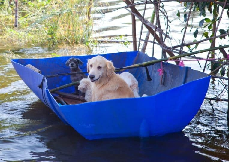 Emergency and Disaster Kit Checklist for your Pet