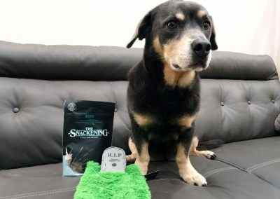 Walter Reviews BarkBox Lamb Treats and Plush Toy