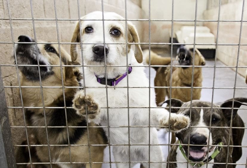 Happy Adopt a Shelter Dog Month!