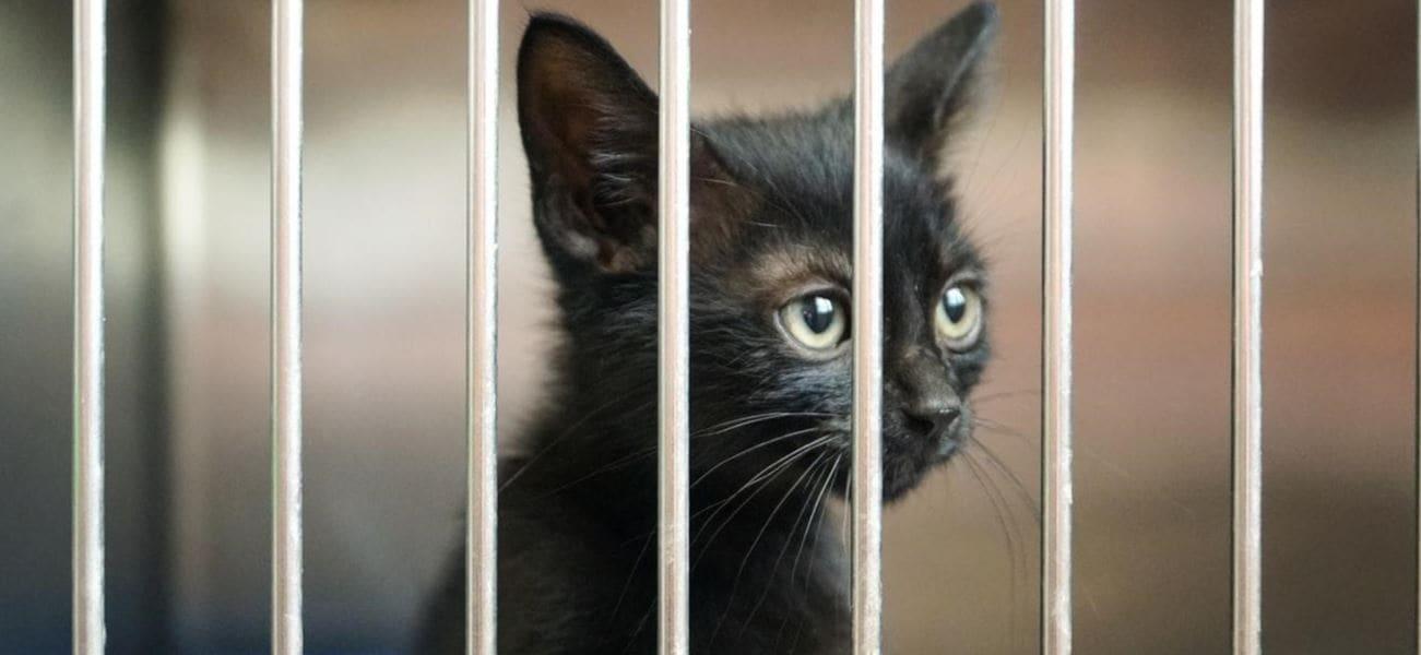 Black cat in cage