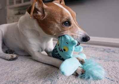 Review of BarkBox Plush Toy Durability