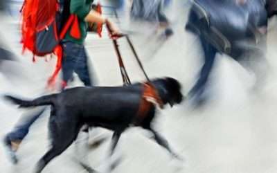 Badass Dogs – Guide Dogs for the Blind & Visually Impaired