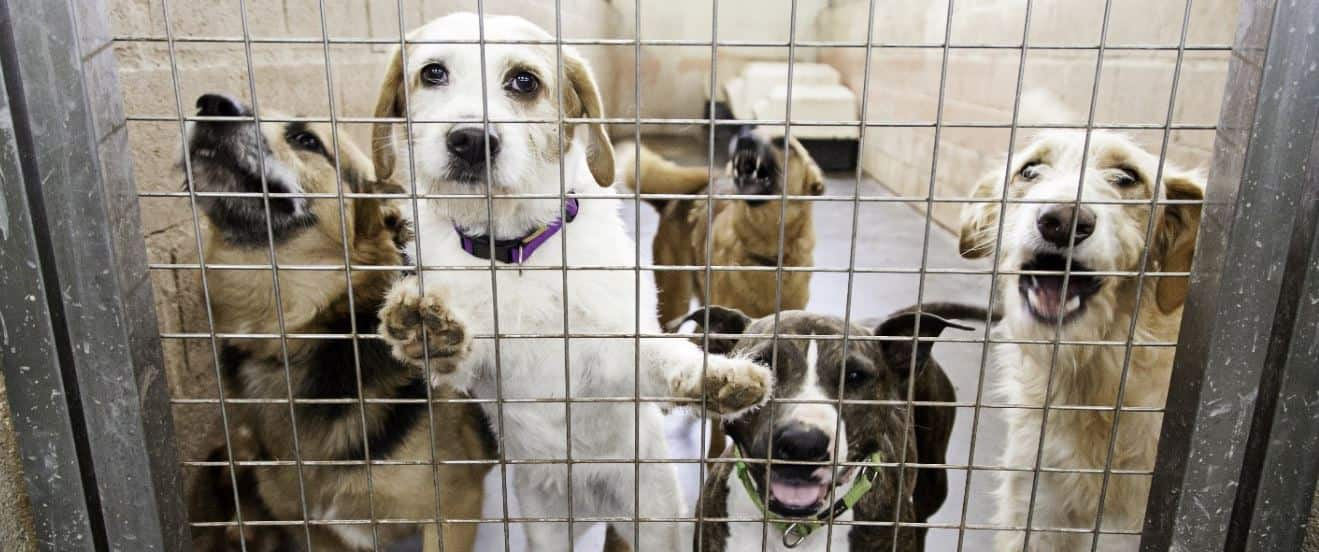 Bunch of dogs in shelter