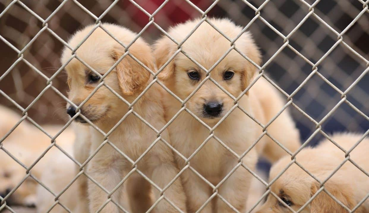 3 puppies in shelter