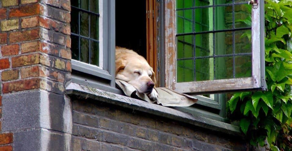Dog sleeping by window