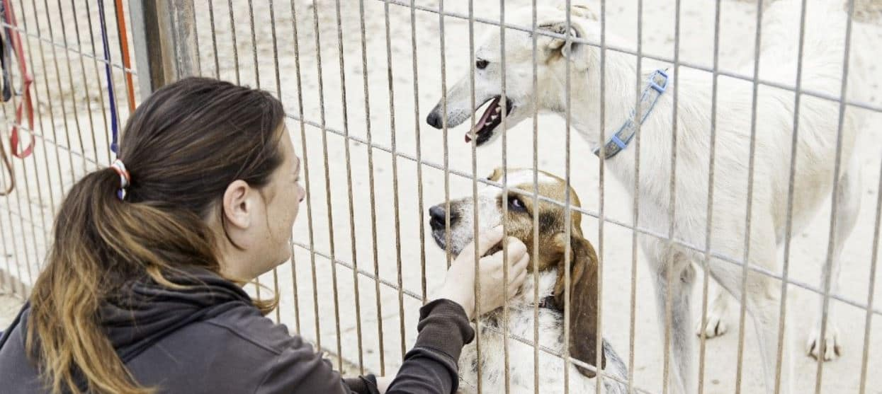 Woman pets shelter dogs