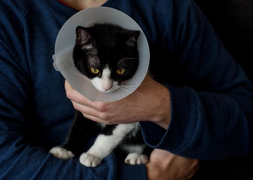 Why You Need to Spay or Neuter your Pet