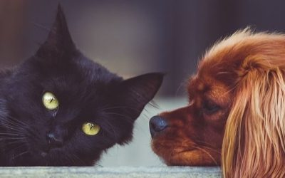 Car Sickness Symptoms and Treatments for Dogs and Cats