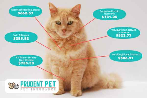 Common Medical Costs for Cats