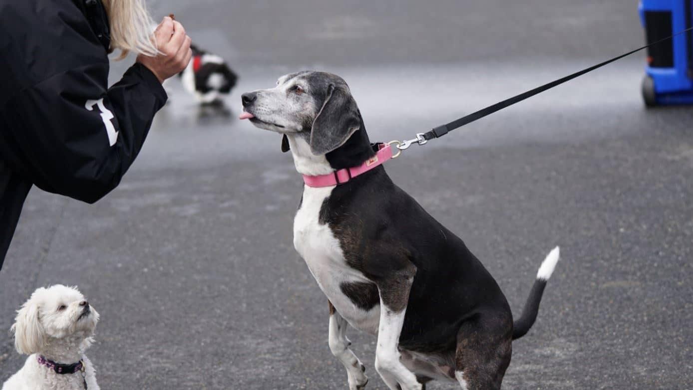 A dog having treats on the street
