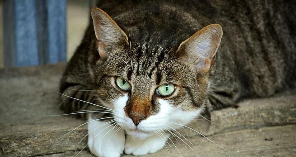 Cat outdoor