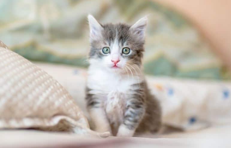 The Cutest Cat Videos