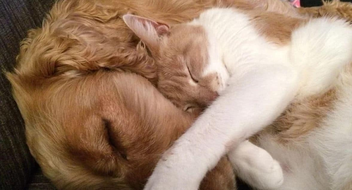 Dog and cat sleep together