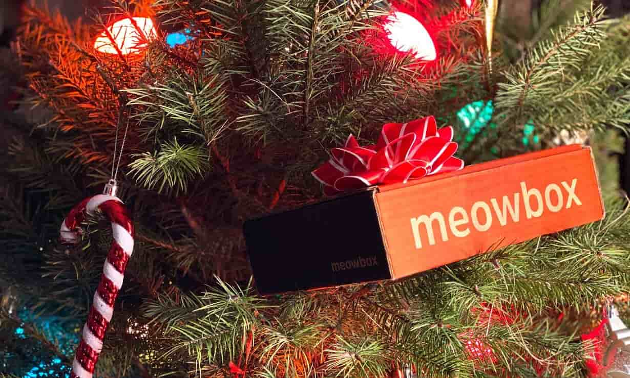 Meowbox in a Christmas tree