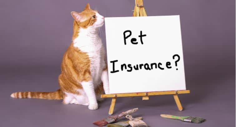 Cat and white board that says Pet Insurance