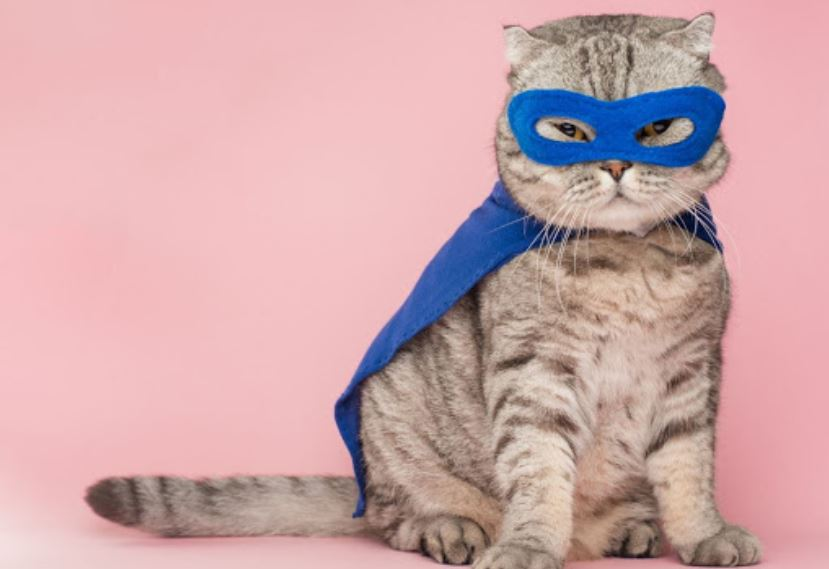 Cat wearing super hero costume