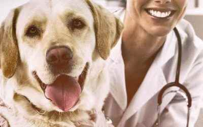 Do Pets Need Annual Physical Exams?