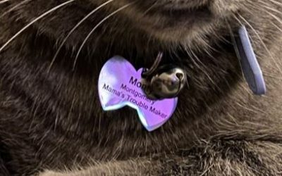 The Stories Behind Prudent Pet's Most Unique Pet Names