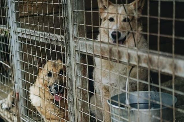 Puppy Mills: Putting an End to Large-Scale Dog Breeding Operations