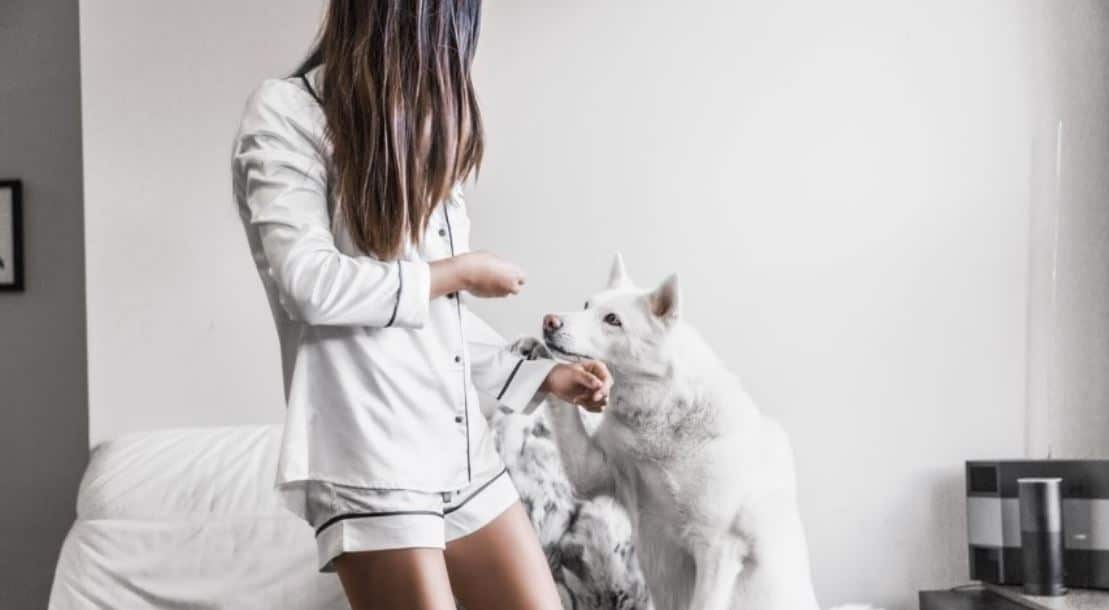 White dog hangs out with a girl on bed