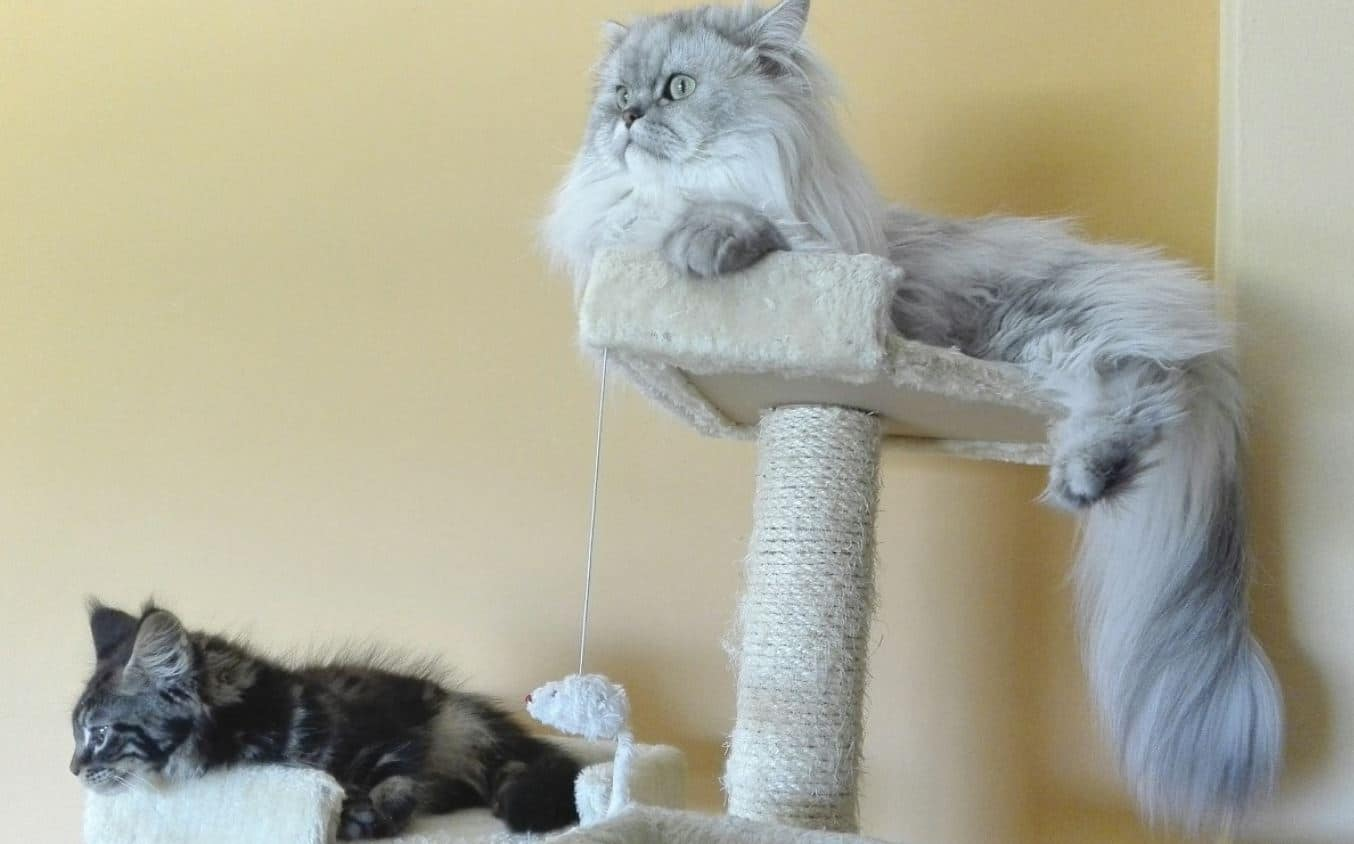 2 cats stay on the cat tower
