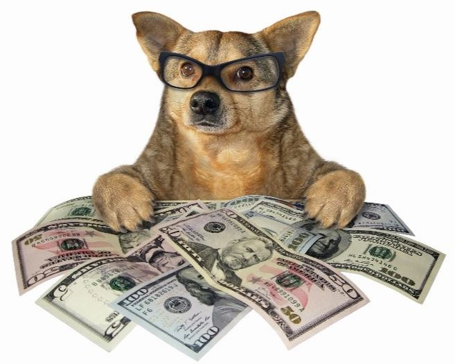 Dog with currency bills
