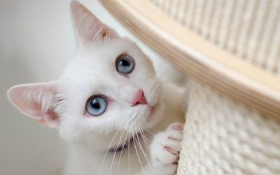Why Do Cats Scratch Themselves?