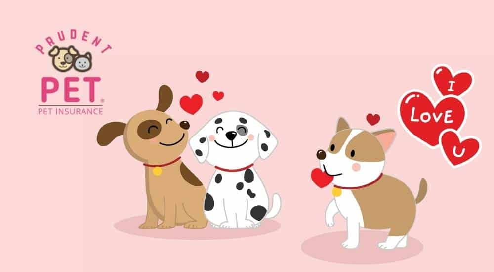 Valentines day pets with hearts and prudent pet logo