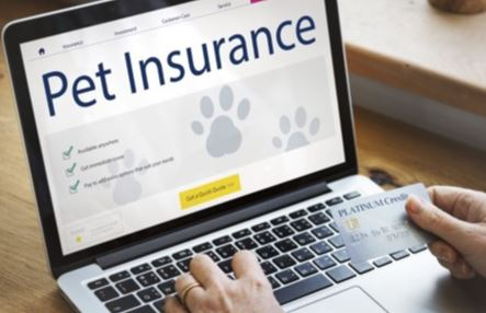 The Best Pet Insurance Options for 2020