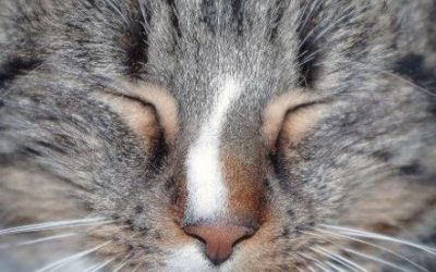 Why are My Cat's Eyes Watering? Watery Eyes and Squinting