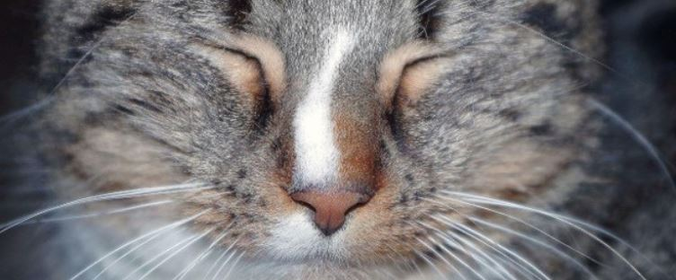 Zoomed up cat closed eyes