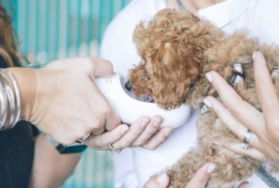 Reduce Pet Stress and Anxiety with Fear Free Vet Clinics