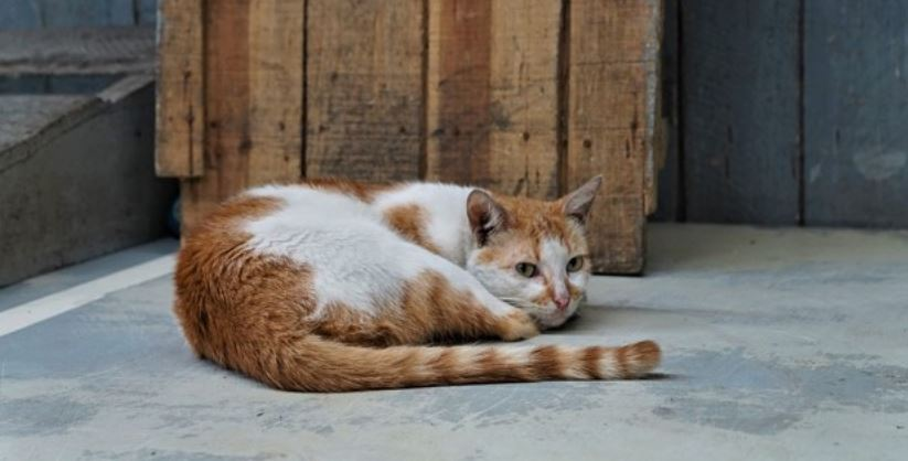 Brown and white colored cat outdoor