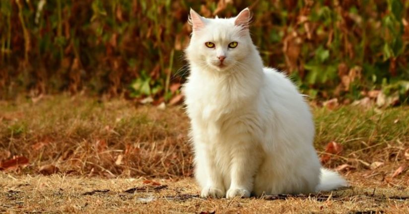 White cat sits in wood