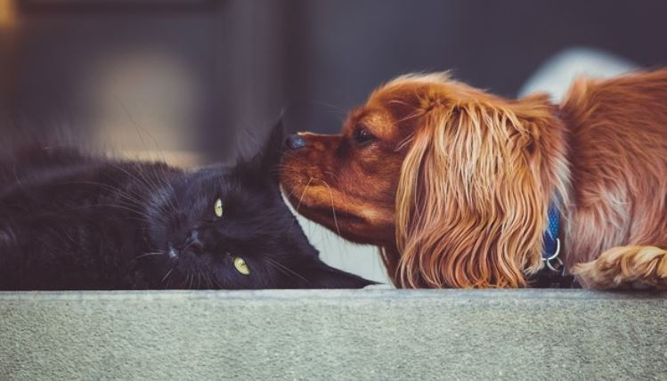 Dog sniffing cat outdoor