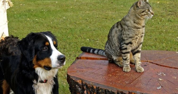 Cat sits down on the table by dog