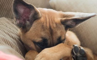 Can Dogs and Cats Get Coronavirus? Vets Say Don't Panic