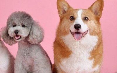 Dog and Cat Diarrhea