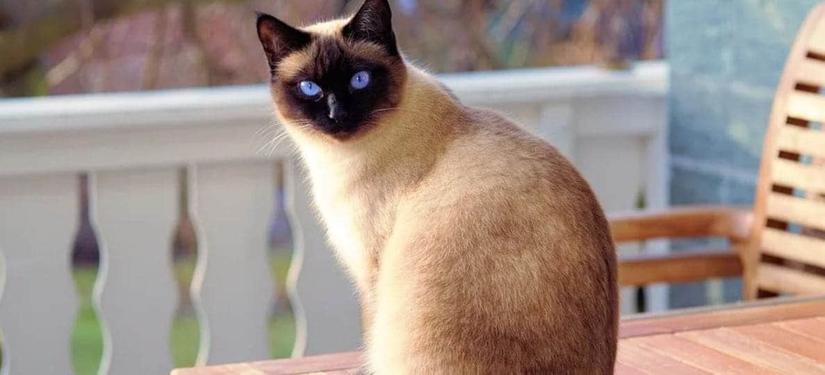 Cat stays outdoor