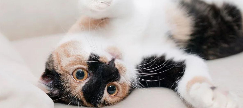 Cat lying on white sheet