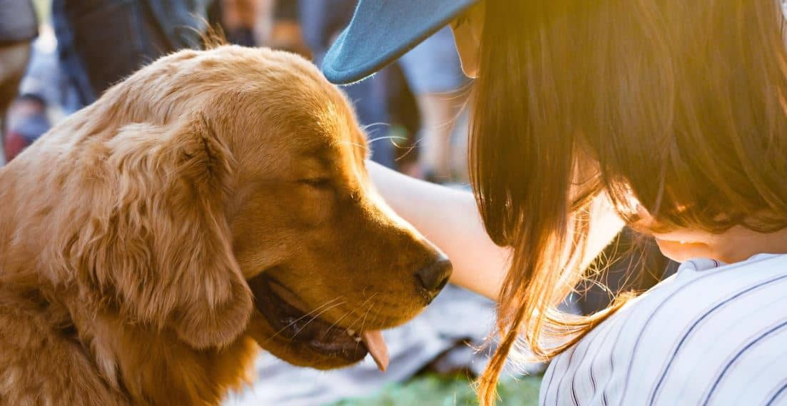 Woman and Labrador enjoy outdoor event
