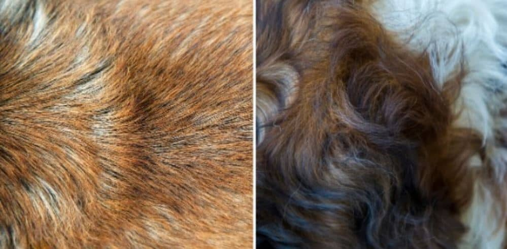 Difference between Dog hair and dog fur