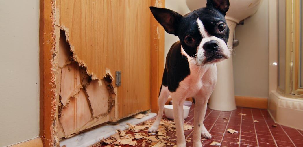 A small dog chewed the door in bathroom