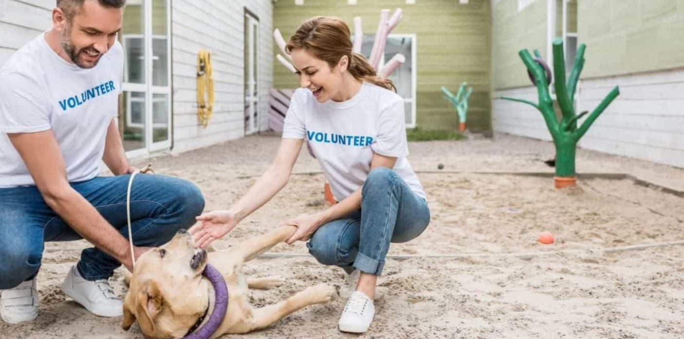 Volunteers at animal shelter for puppy mill dogs