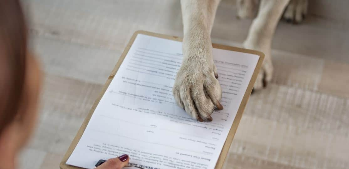 Dog sign off with his paw