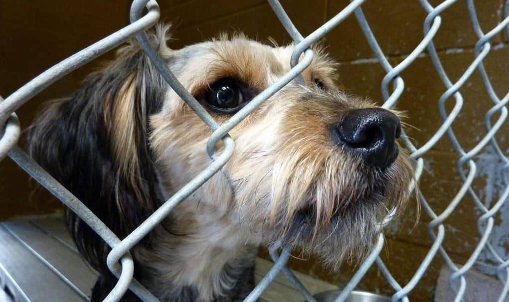 Puppy mills and rescue