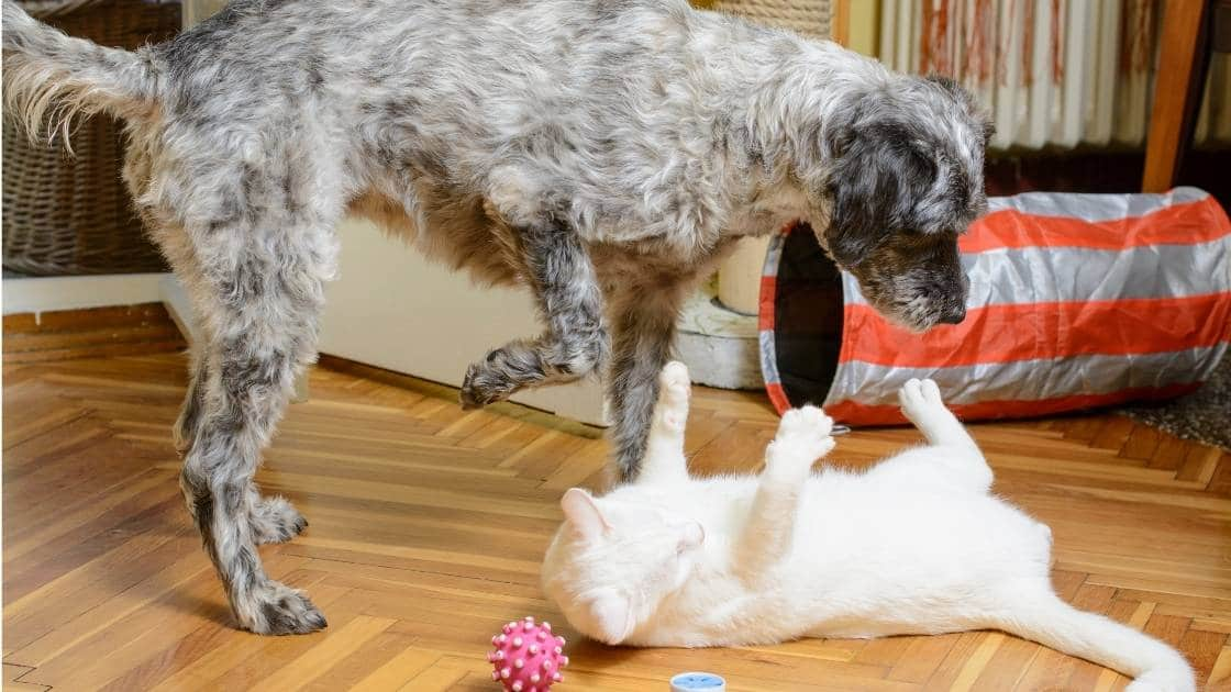 Small dog and cat playing on floor together