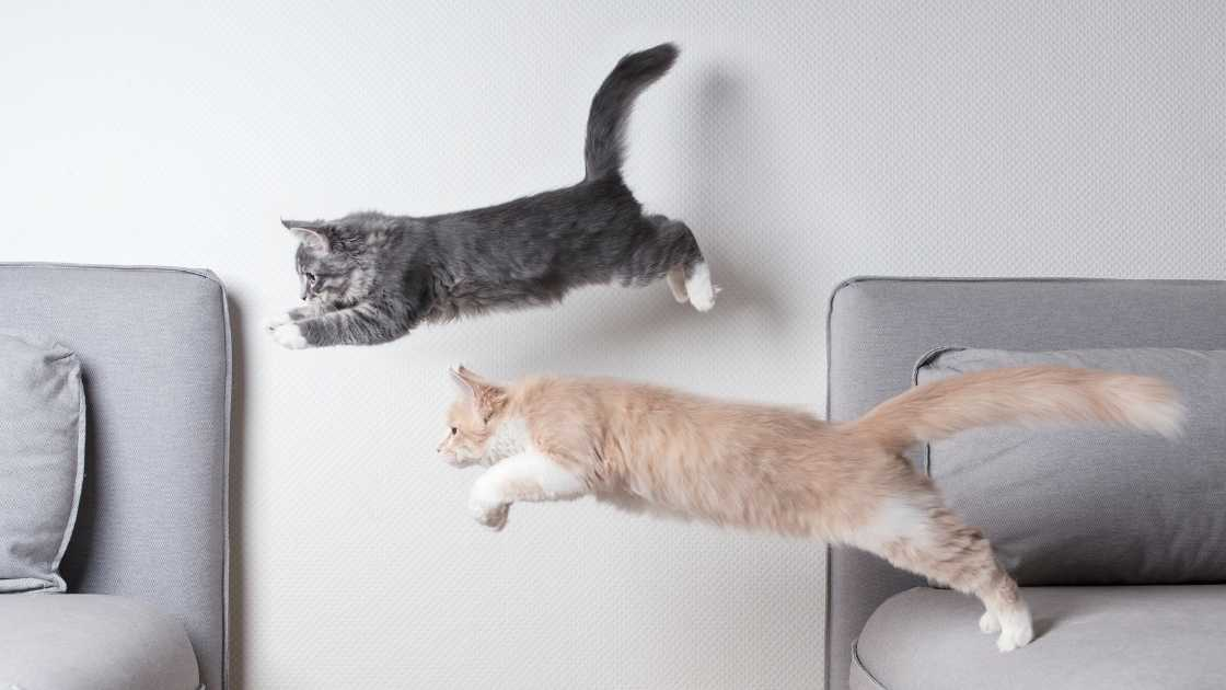 Two young cats jumping from furniture